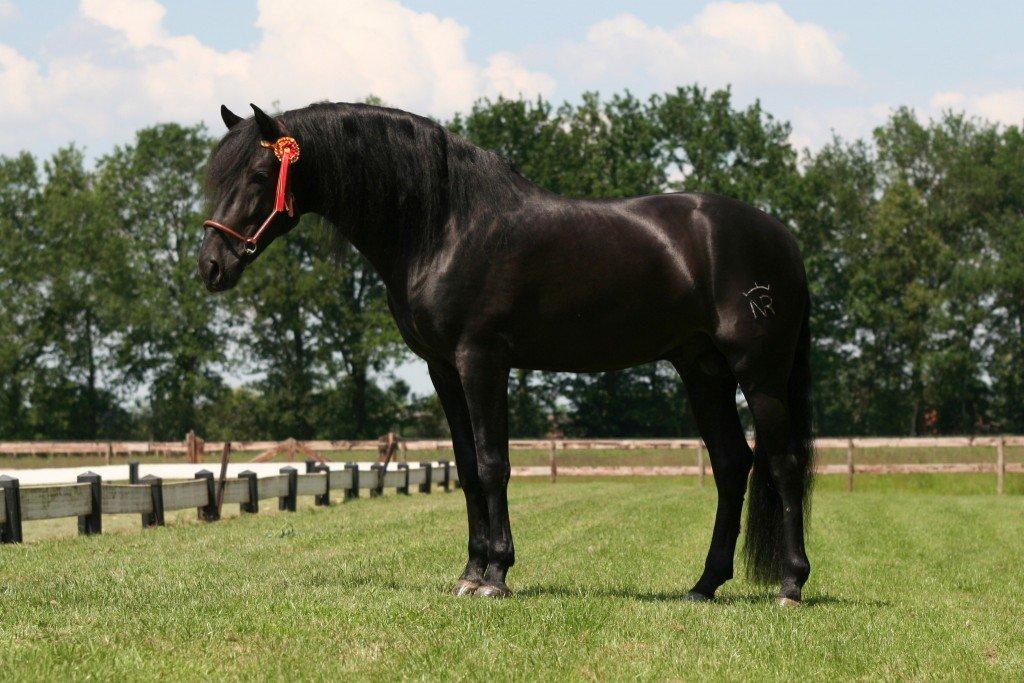 begeleiding aankoop paard